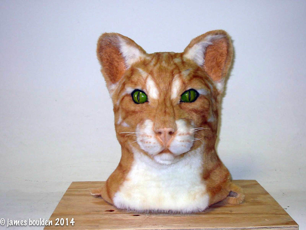 Create a truly unique cat mask of your own!