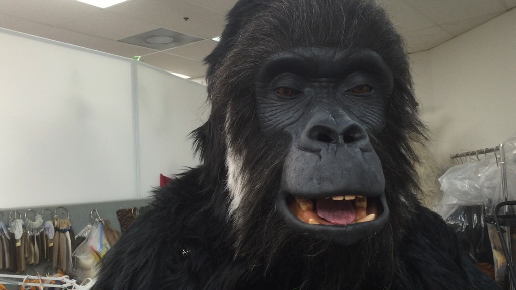 Maxim Gorilla with Animatronic Face