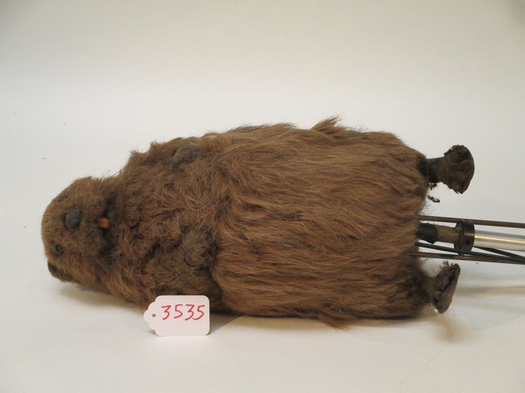 Standing Beaver Cable Controlled Puppet