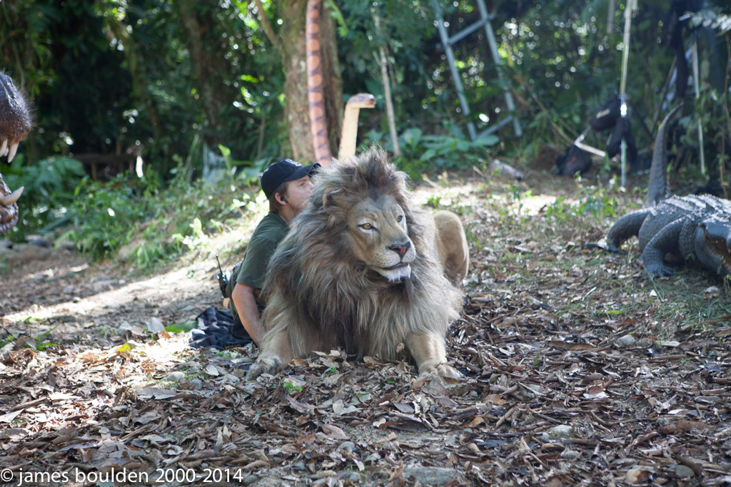 A puppeteer bring the Male Lion to life on Set
