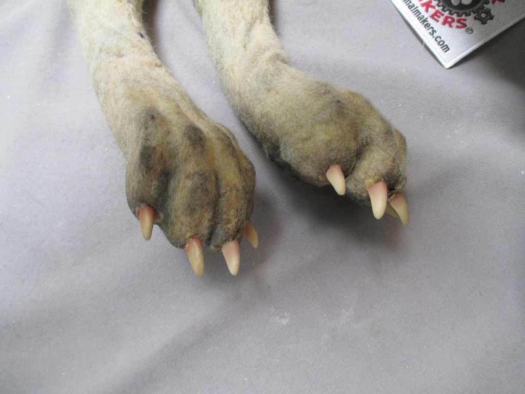 rear paws close-up