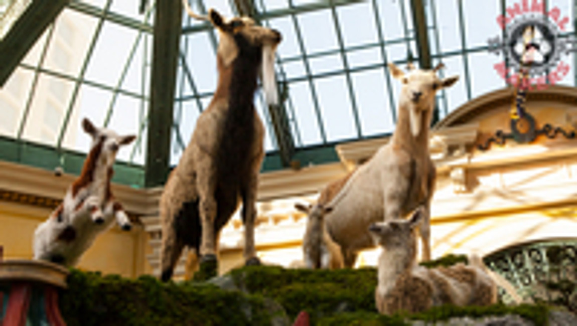 Why Would a Luxury Resort Display Animated Goats?