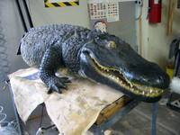 Fresh paint job animated alligator prop