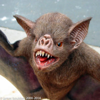 animated vampire bat for film directors