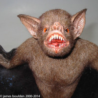face of animated vampire bat for film directors