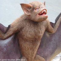 animated vampire bat for film directors, as seen from side