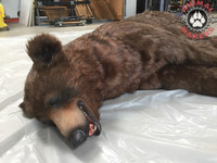 brown bear replica sleeping adult movie prop