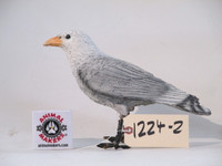 Background Seagull Bird Movie Prop