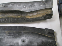 Boa Constrictor or Python Movie Prop Mold for 6' long snake