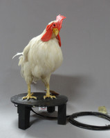 Rooster Chicken Prop