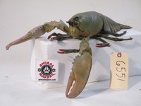 Realistic Maine Lobster Movie Prop - Uncooked paint job