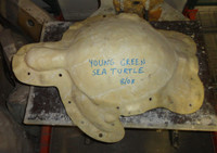 Young Atlantic Green Sea Turtle Mold