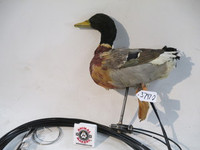Malard Duck Swimming Animatronic 2 Puppet