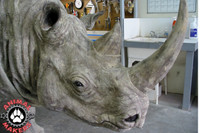 Finished Rhino head.