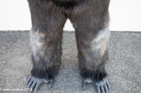 Gorilla feet and legs