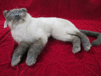 Cat Replica Laying Position