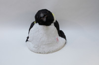 Realistic Emperor Penguin Puppet for Movie and Video
