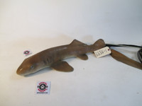 Animated Nurse Shark