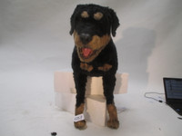 As is photo of an Animated Dog Attack Movie Prop Rottweiler Realistic photographed in 2014.