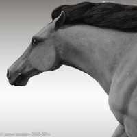 Wild Stampeding, Life sized, Mustang Horse Sculpture