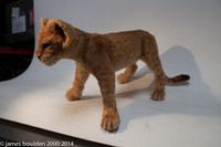 baby lion or tiger cub replica