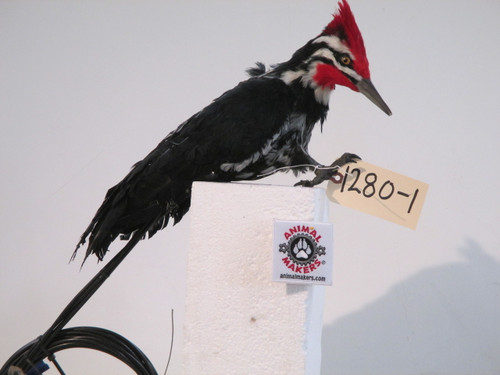 Realistic Piliated Woodpecker Bird Movie Puppet