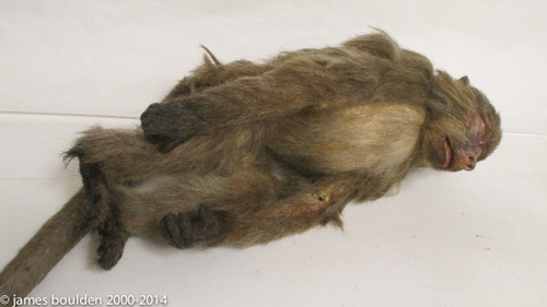 Baboon Monkey Movie Prop Replica