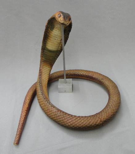 Cobra Snake Replica Prop Medium