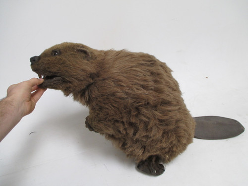 Realistic Beaver Hand Puppet