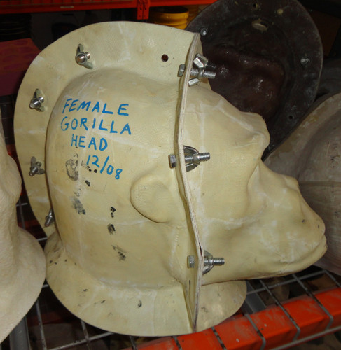 Gorilla Female Adult Head Mold