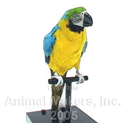 animated parrot movie prop