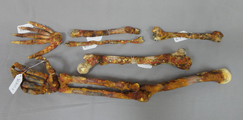Large Human Skeleton Replica Parts Set 1