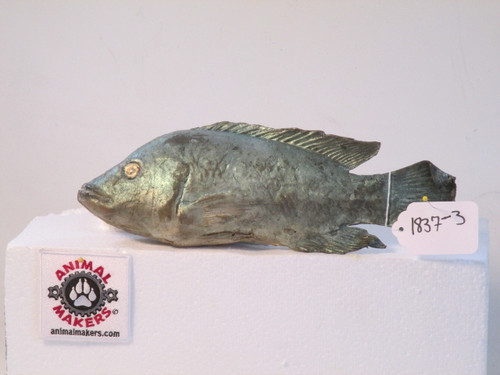 Realistic Fish Replica Tilapia Movie Props