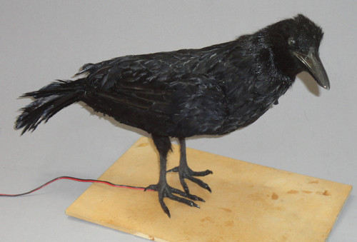 Animated Crow Bird Prop