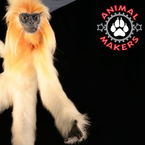 Golden Langur Monkey