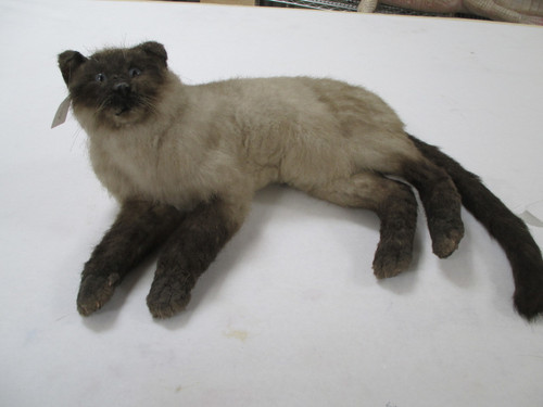 Persian cat in a laying position, A bit larger than life. Good for display. Artificial fur and eyes.