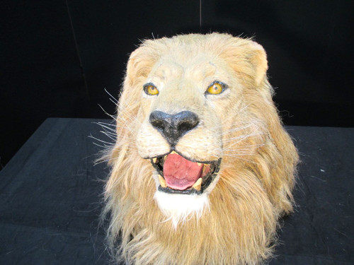 Animated African Lion Head