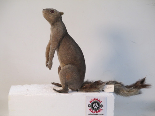Squirrel posable
