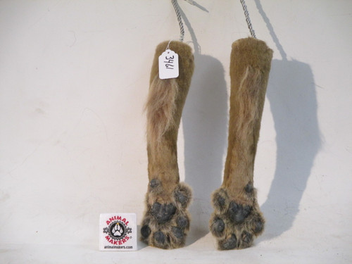 Lion Paws Brown