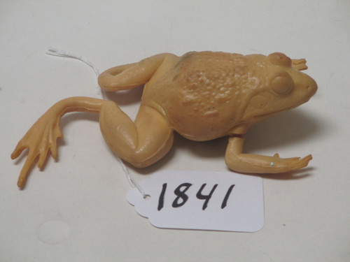 Toad Blank