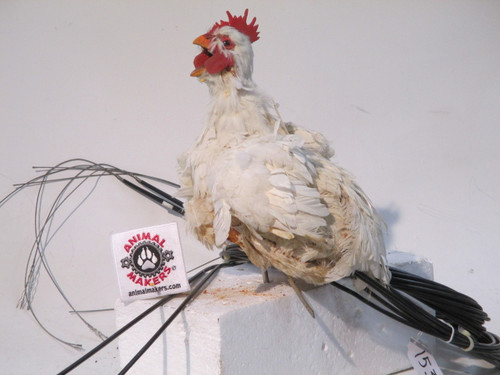 ANIMATED CHICKEN PROP