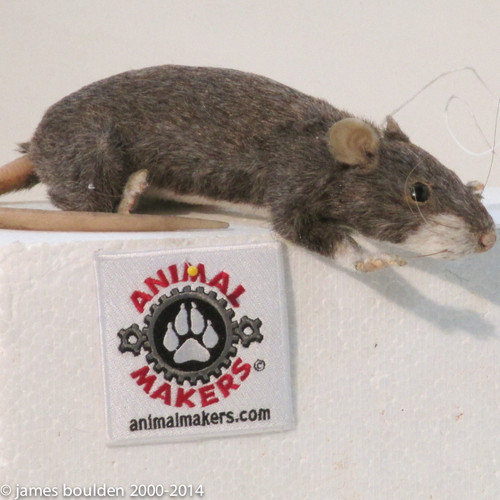Large Rat With Hollow Body
