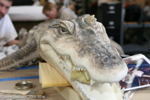 Caiman alligator prop that comes from these molds