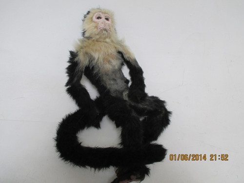 Capuchin Monkey (Poseable)