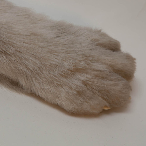 Animated dog paw movie prop in long hair with control lines shown coming out back of paw