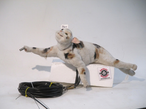 Calico Cat Hand Stand