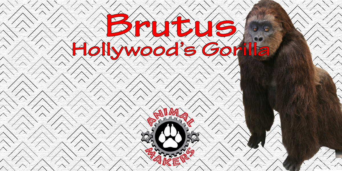 Brutus Hollywoods Gorilla