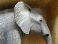 Full sized, realistic, elephant replica in crate, ready for shipping