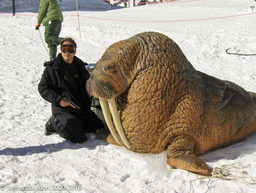 Make this walrus costume with the included mold sets