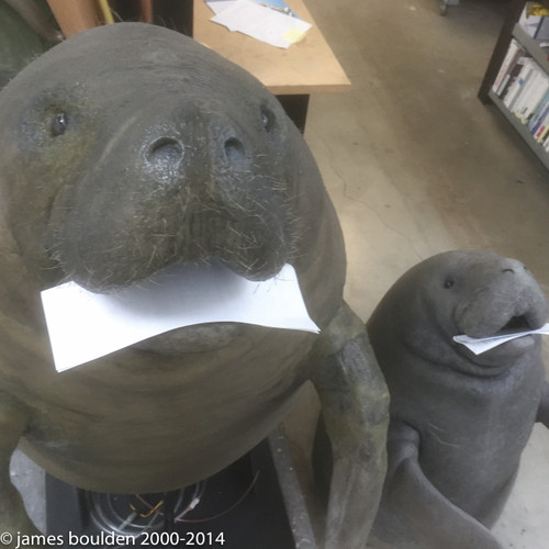 realistic manatee puppet package set